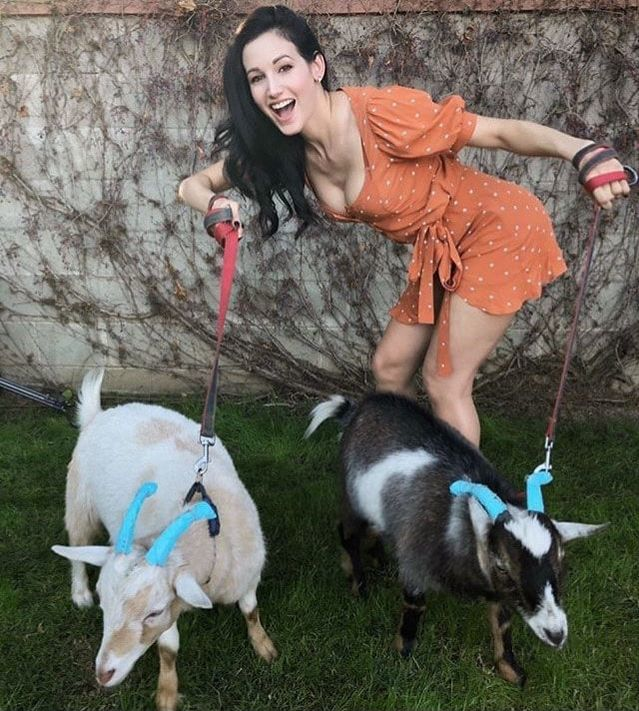 d6ab04c2c64 Book Party Goats for your next event